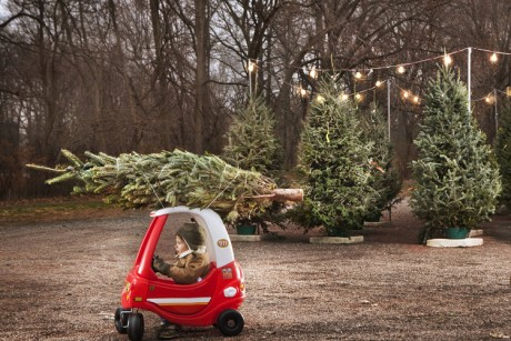 Little Boy With Christmas Tree On Top Of Toy Car Sandra Benyak  - Christmas Tree On Car